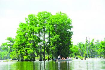 SEE THE SWAMP as you never have before. Lake Martin tour guides, all former crawfishermen, use large, flat-bottom, sharp-bowed skiffs designed to navigate comfortably in shallow water and flooded forests. A typical  tour takes about two hours.
